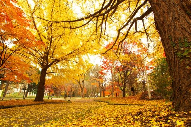 秋といえば?秋に行う遊び、レジャーといえばコレ!今年の秋を後悔しないために!