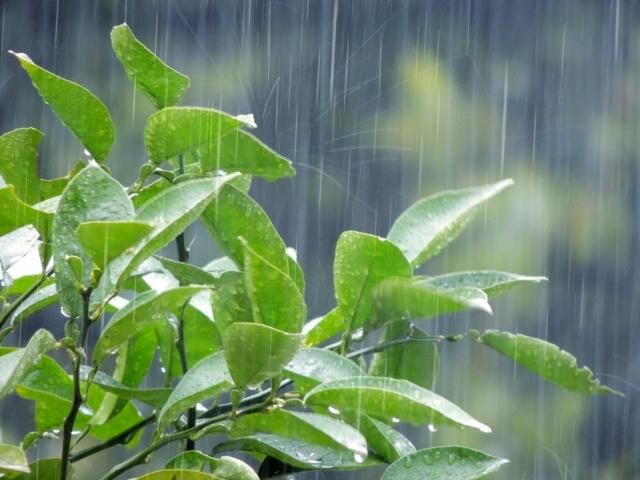 名古屋まつりは雨でも開催される?雨天時は中止?台風の天気予報に注意
