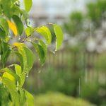 くらやみ祭り2019は雨でも開催?雨天中止?東京都府中市の天気予報に注意