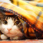 冬の寒さ、防寒対策!部屋が寒い時の窓、フローリング対策や暖かい服装