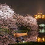 三渓園の桜2018開花満開予想!見頃時期やライトアップの時間、アクセス
