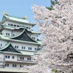 名古屋城桜まつり2019開花満開状況!見頃や屋台出店、夜桜ライトアップ