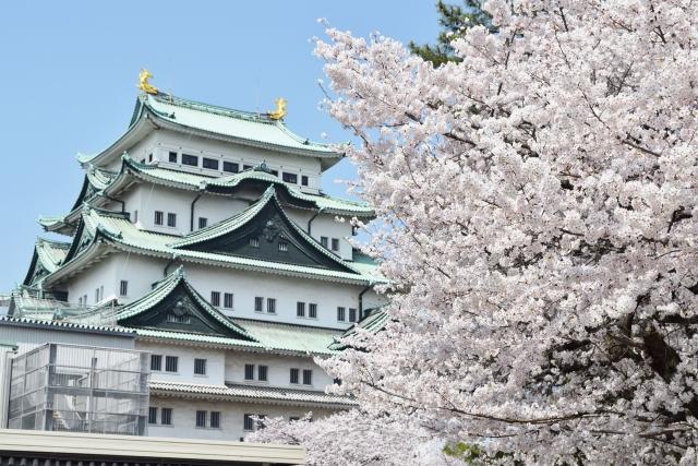 名古屋城桜まつり2020開花満開状況!見頃や屋台出店、夜桜ライトアップ