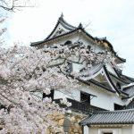彦根城桜まつり2018開花満開予想!見頃時期や混雑、夜桜ライトアップ時間