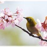 春の動物、植物、花、魚といえば?動物園や水族館で会える春の動植物