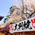 造幣局 桜の通り抜け2018開花状況!見頃時期や屋台出店、夜桜ライトアップ