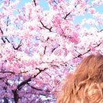 河津桜2019の見頃時期は?関東、東京都内、千葉、埼玉の開花状況と場所