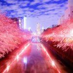 目黒川の桜2018おススメ花見場所や夜桜ライトアップ時間、屋台露店情報
