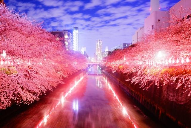 目黒川の桜2020おススメ花見場所や夜桜ライトアップ時間、屋台露店情報
