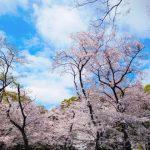 上野公園の桜祭り2018開花予想!見頃時期やおススメ花見場所、見所