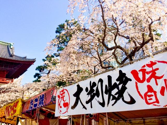 造幣局 桜の通り抜け2019開花状況!見頃時期や屋台出店、夜桜ライトアップ