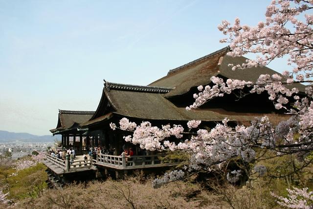 清水寺の桜2019開花満開予想!見頃時期と混雑、夜桜ライトアップ時間