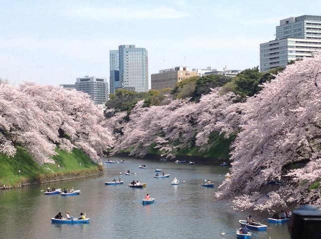 千鳥ヶ淵の桜2020開花満開状況!見頃と花見、混雑、夜桜ライトアップ
