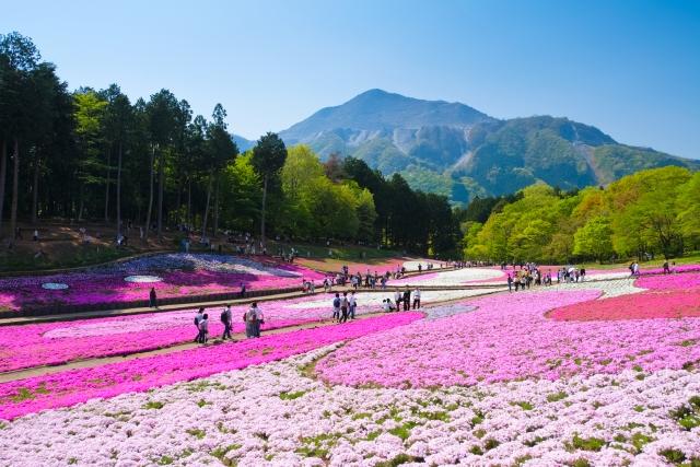 芝桜2020関東、秩父、千葉、東京の名所は?場所、見頃時期、アクセス